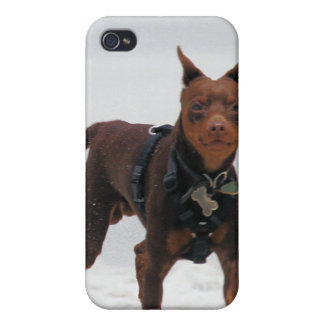 Doberman and Min Pin - LOOK A Mini Me iPhone 4 Cover
