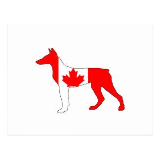 Doberman Canada Postcard