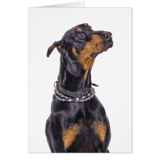 Doberman With Sneaky Look Who Me? Card