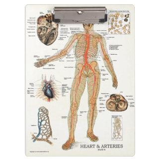 Doctors Office Heart Anatomy Clipboard