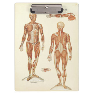 Doctors Office Muscle Anatomy Clipboard