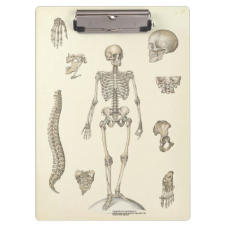 Doctors Office Skeleton Anatomy Clipboard