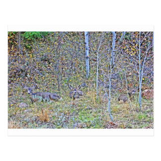 Doe deer and fawns postcard