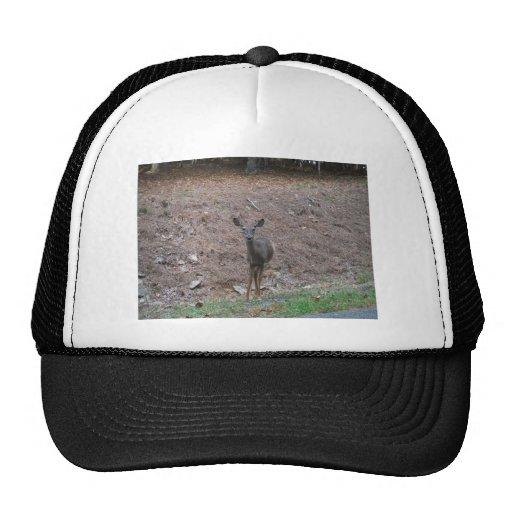 Doe Deer on the Pine straw Trucker Hat