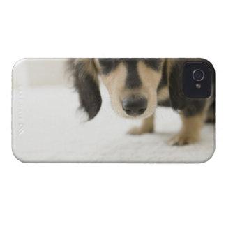 Dog 2 iPhone 4 Case-Mate cases
