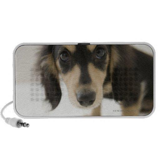 Dog 2 travel speakers