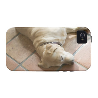 Dog 3 iPhone 4 cover