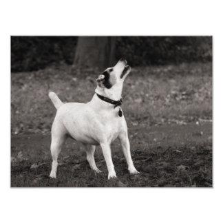Dog Agog Art Photo