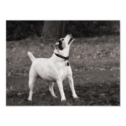 Dog Agog Photo Art