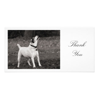 Dog Agog - Thank You Personalized Photo Card
