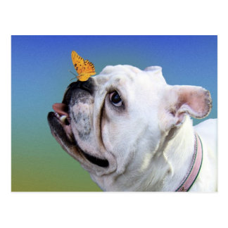 Dog and butterfly postcard
