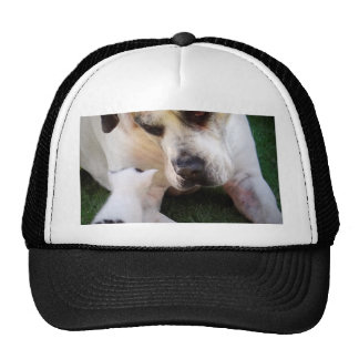 Dog and cat image hats