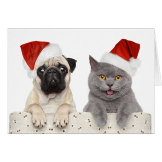 Dog And Cat In Red Christmas Hat Greeting Card