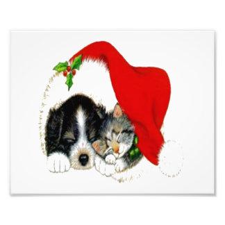 Dog and Cat Sharing Santa Hat Art Photo