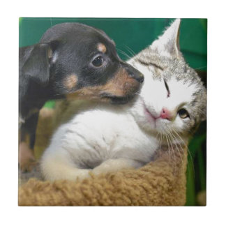 Dog and cat small square tile