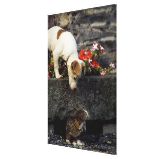 Dog and cat stretched canvas print