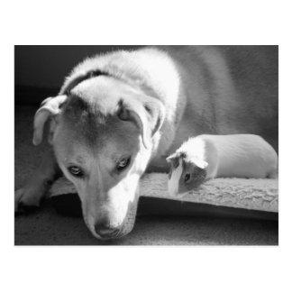 Dog and Guinea Pig Postcard