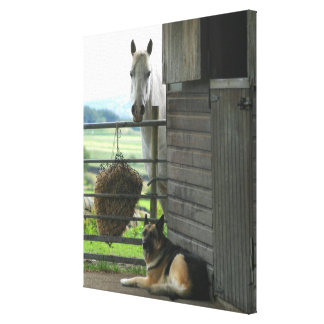 Dog and horse at ranch in Menton, France Canvas Print