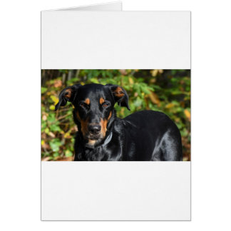 Dog Beauceron Card