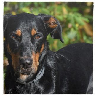 Dog Beauceron Napkin