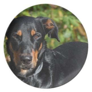 Dog Beauceron Plate