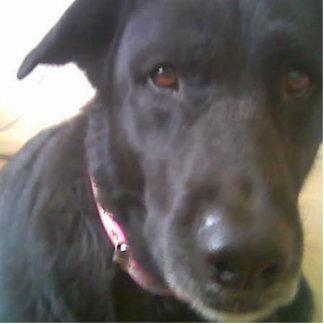 DOG BLACK LAB PHOTO SCULPTURE