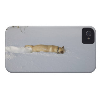 Dog burrowing in snow iPhone 4 covers