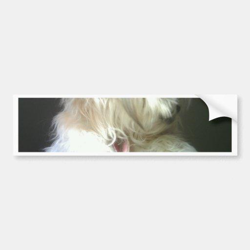 Dog Card Bumper Stickers