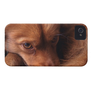 dog blackberry bold covers