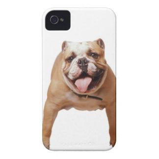 ,dog iPhone 4 cases