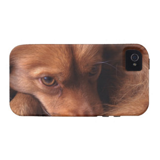 dog case for the iPhone 4
