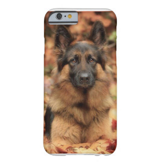 Dog Cases & Covers