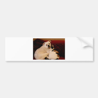 Dog Cat Cuddle Bumper Sticker