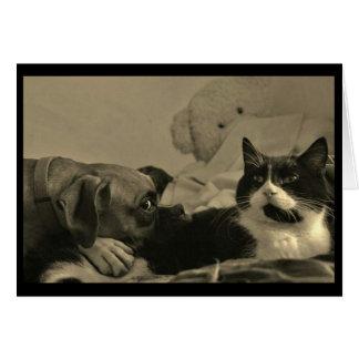 Dog & Cat Cuddle Card
