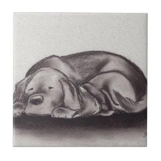 Dog & Cat Snuggle Sleeping Ceramic Tile