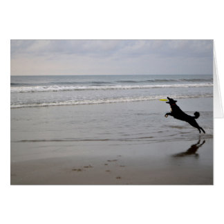 Dog Catching Beach Frisbee Note Card