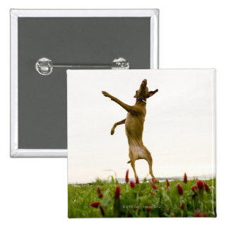 Dog catching tennis ball in mid-air 15 cm square badge