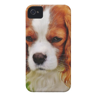 Dog Cavalier King Charles Spaniel Funny Pet Animal iPhone 4 Cases