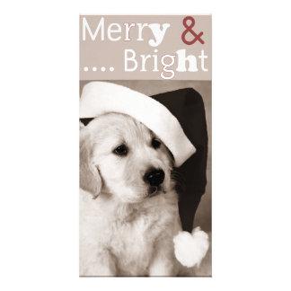 dog christmas photocard photo greeting card