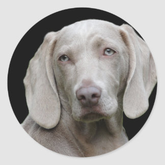 dog classic round sticker