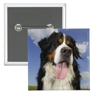 Dog, close-up 15 cm square badge