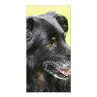 dog custom photo card