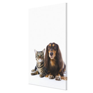 Dog (Dachshund) and cat (Japanese cat) on white Canvas Print