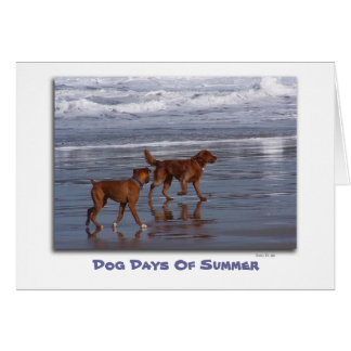 Dog Days Of Summer Greeting Card