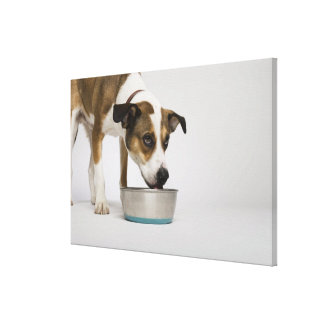 Dog eating from bowl stretched canvas print