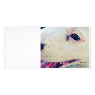 Dog Eye Card Photo Card