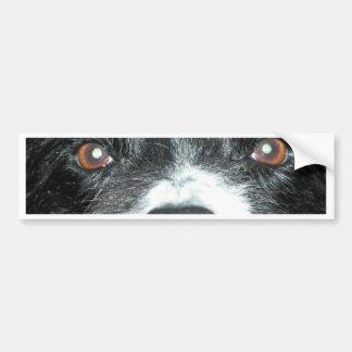 Dog eyes bumper sticker