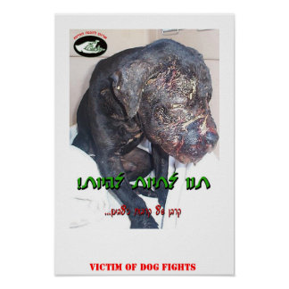 DOG FIGHTS POSTER