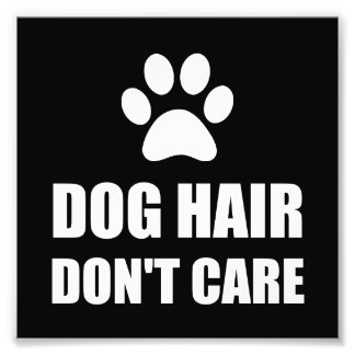 Dog Hair Dont Care Photo