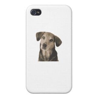 Dog Head Tilt iPhone 4/4S Cases